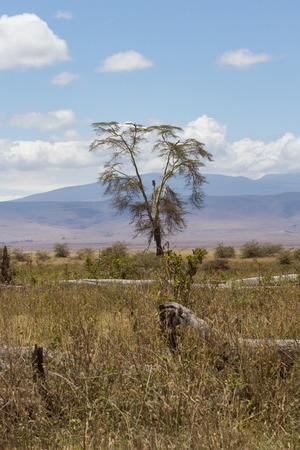 Tree on edge of Ngorongoro Crater in Tanzania