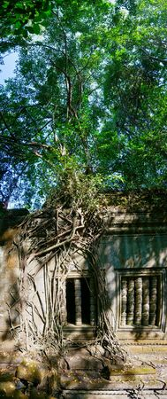 Banyan trees growing in temple ruins at the unrestored Khmer temple of Beng Mealea, around 50km west of Siem Reap in Cambodia