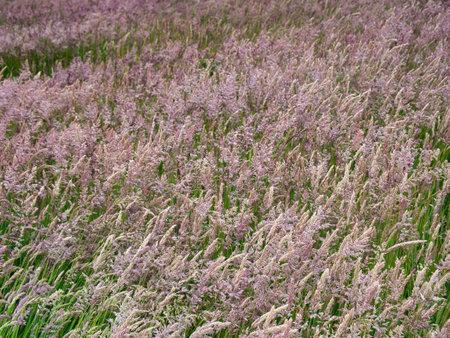 A field of cultivated grass in Antrim, Northern Ireland, UK Standard-Bild