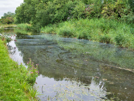 Surface pollution on the Leeds Liverpool Canal in Lancashire, England, UK
