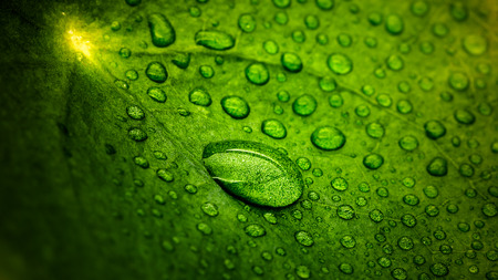 Macro shot of droplets on a leaf Stock fotó