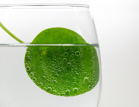 Macro shot of a green round leaf in a glass full of cabonated water.