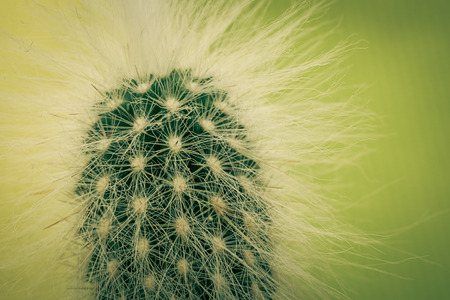 Macro shot of a mini cactus