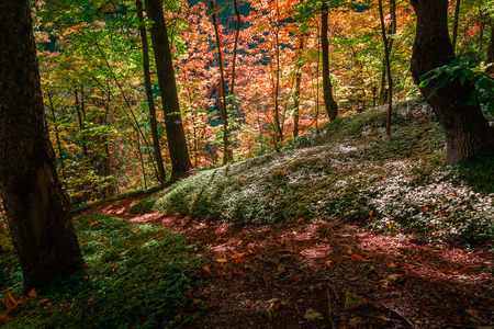 Autumn colors inside the forest