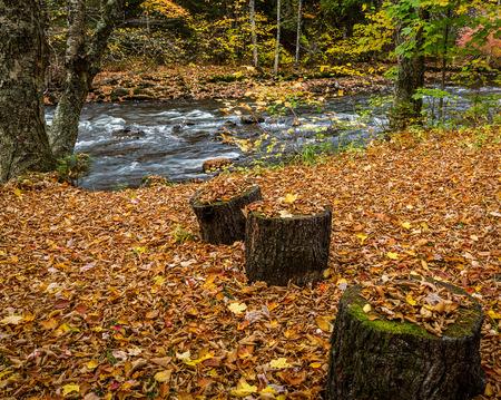 Cut trees near a river in autumn