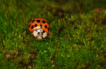 Macro shot of a lady bug walking on vegetation