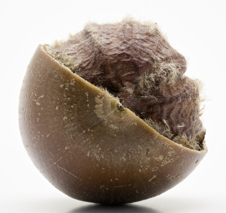 Macro shot a an open nut