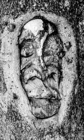 Black and white picture of a face sculpted in a tree