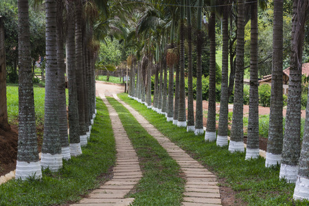 CIA: View of a path with palm trees on BOTH sides Stock Photo