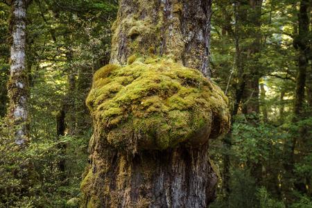 cascade creek tree trunk