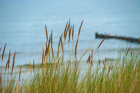 Dune grass in front of blurred eastern sea of Germany Stock Photo