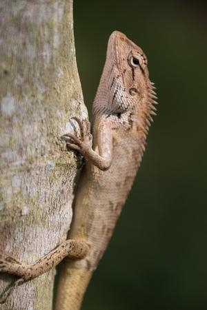 Lizard climbing Tree