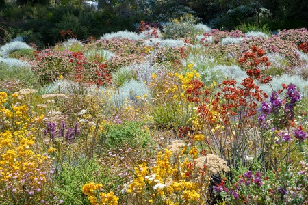 Flowers in many colors in Perth botanical garden with its collection of West Australia Stock Photo