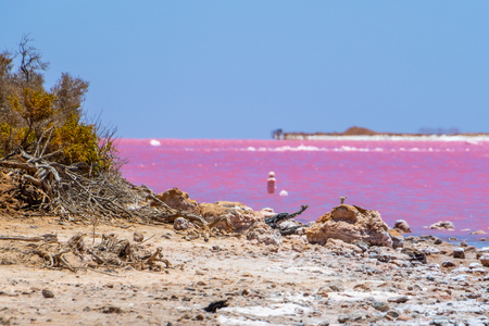 Dead wood and salt crystals at the beach of the pink lake next to Gregory in West Australia Stockfoto