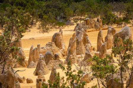 Upright standing rocks and stones between small trees at the Pinnacles Desert, Western Australia Stockfoto