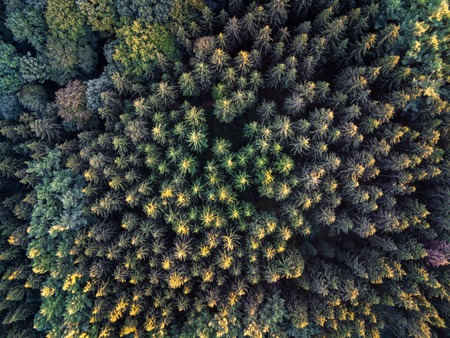 Aerial shot of forrest looking downwards on the symmetric tree tops in summer