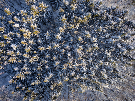 Snow covered needle tree tops during sunny winter day aerial image Stockfoto