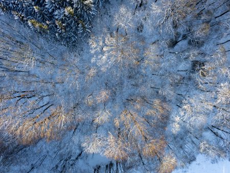 Forrest seen from above during winter snow covered with leaves and sun