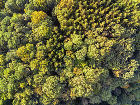 Aerial shot of mixed tree forrest looking downwards on the green tree tops during summer sunset Stockfoto