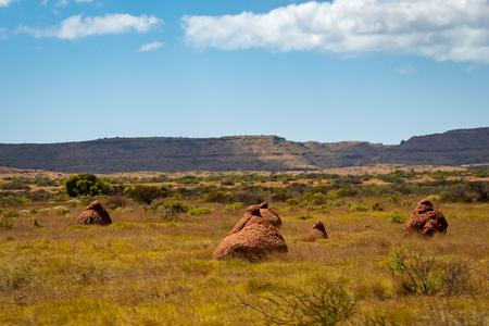 Many termite mounts in arid bush landscape of Western Australia