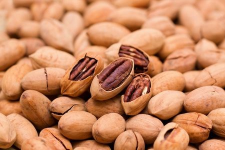 hickory nuts: Pecan background