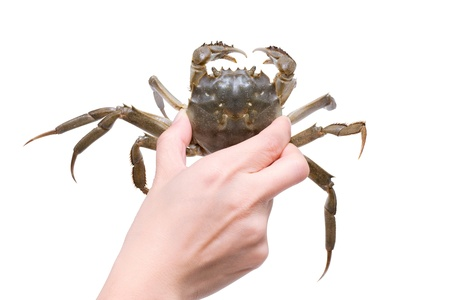 holding a crab  Clipping path Stock Photo - 12713652