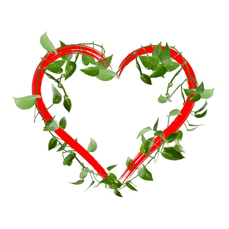 Green leaves heart isolated on white Stock Photo - 12776501