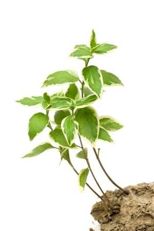 Green plant grow in the soil Stock Photo - 12713644