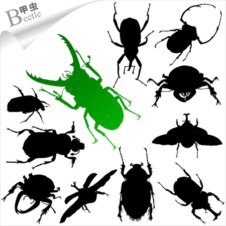 Silhouettes of insect - beetles  Vector