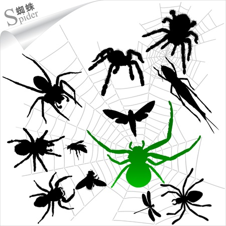 Silhouettes of insects - Spiders Vector