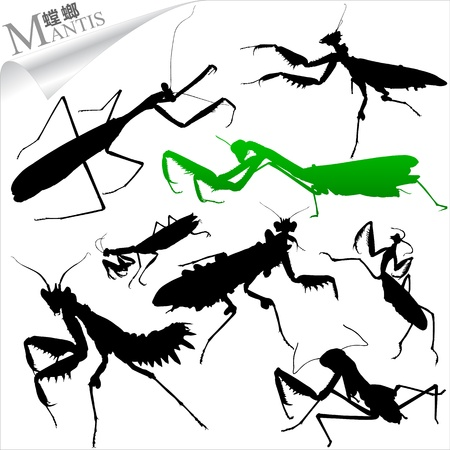 Silhouettes of insects - mantis Vector