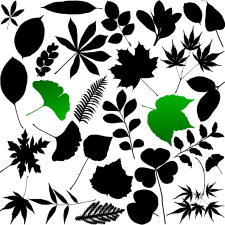 sycamore: Leaves silhouette Illustration