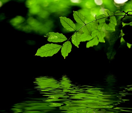 Green leaves reflection Stock Photo