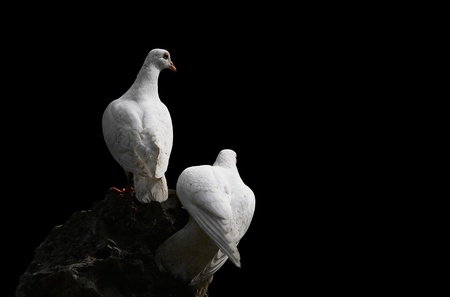 Pigeon Stock Photo - 13205633