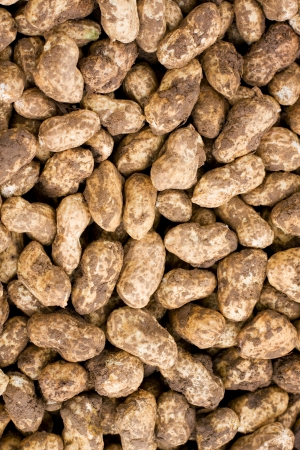 Fresh peanut background photo