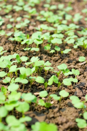 New seedling Stock Photo - 14975193