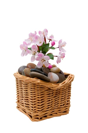 complementary therapy: Spa stones with flowers