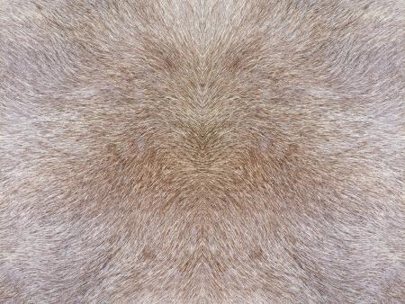 Fur texture photo