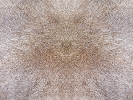 peltry: Fur texture Stock Photo