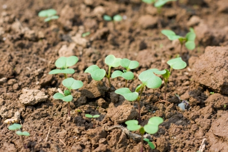 New seedling  Stock Photo - 15967049