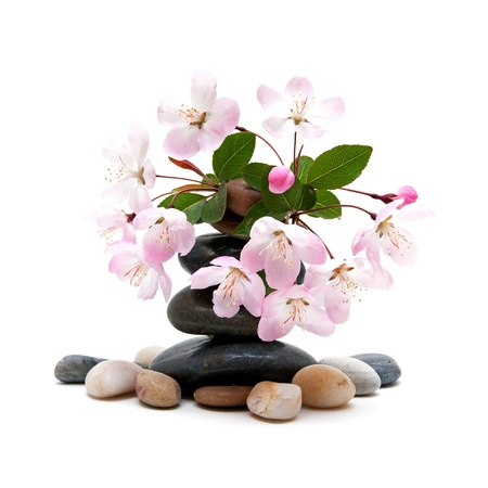 complementary therapy: Zen,spa stones with flowers