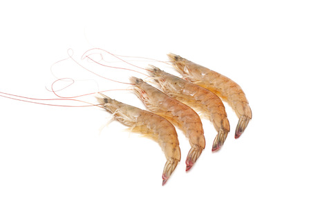 antennae: Shrimp isolated on white background