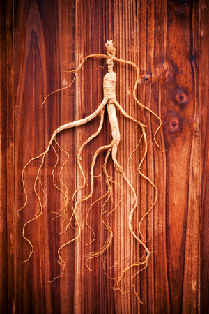 medicina tradicional china: Dry ginseng on wooden background- Concept of traditional Chinese medicine