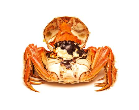 Cooked Chinese hairy crab isolated on white