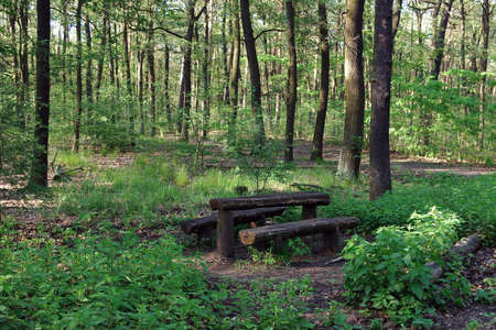 Old wooden resting place (two benches and table) in the summer forest