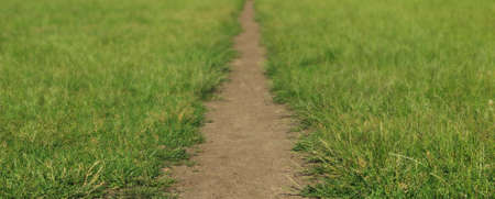 Straight meadow path surrounded by fresh green grass, blurred