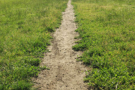 Straight meadow path surrounded by fresh green grass