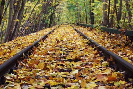 Yellow Leaves Coating Railway