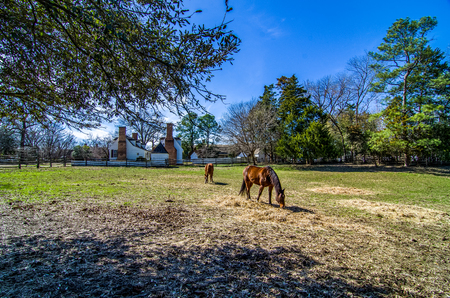 english house: Brown horses near traditional english house in Colonial Williamsburg, Virginia, USA