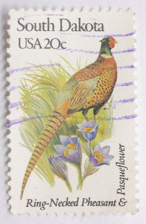 Macro of South Dakota pheasant stamp isolated on a white background.